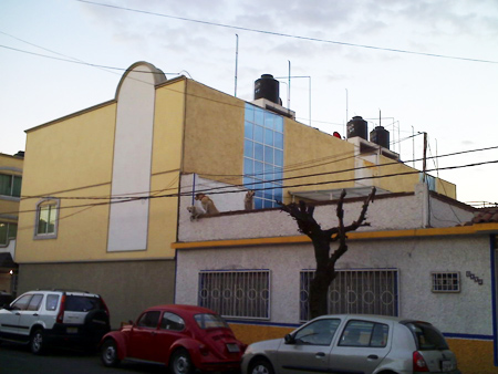 Три песики на даху в Мехіко (Tres perros, techo, Mexico DF)